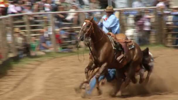 Rodeo Cowboys - Bulldogging Steer Wrestling in Slow Motion