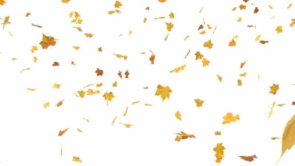 Falling autumn leaves backgrounds - isolated and loopable with alpha