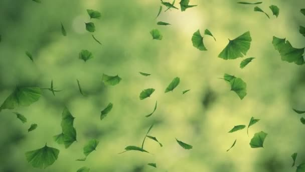 Falling gingko foliage - looped animation