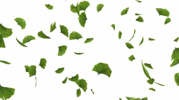 Falling gingko leaves - alpha masked and looped cg animation