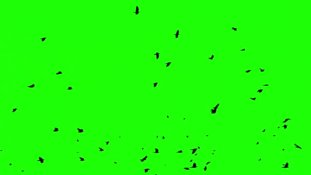 Birds green screen