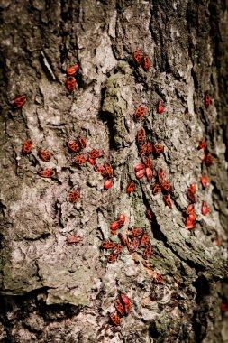 Beetles red background