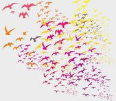 Fotografie ptáci silueta nastaví vektorové umění