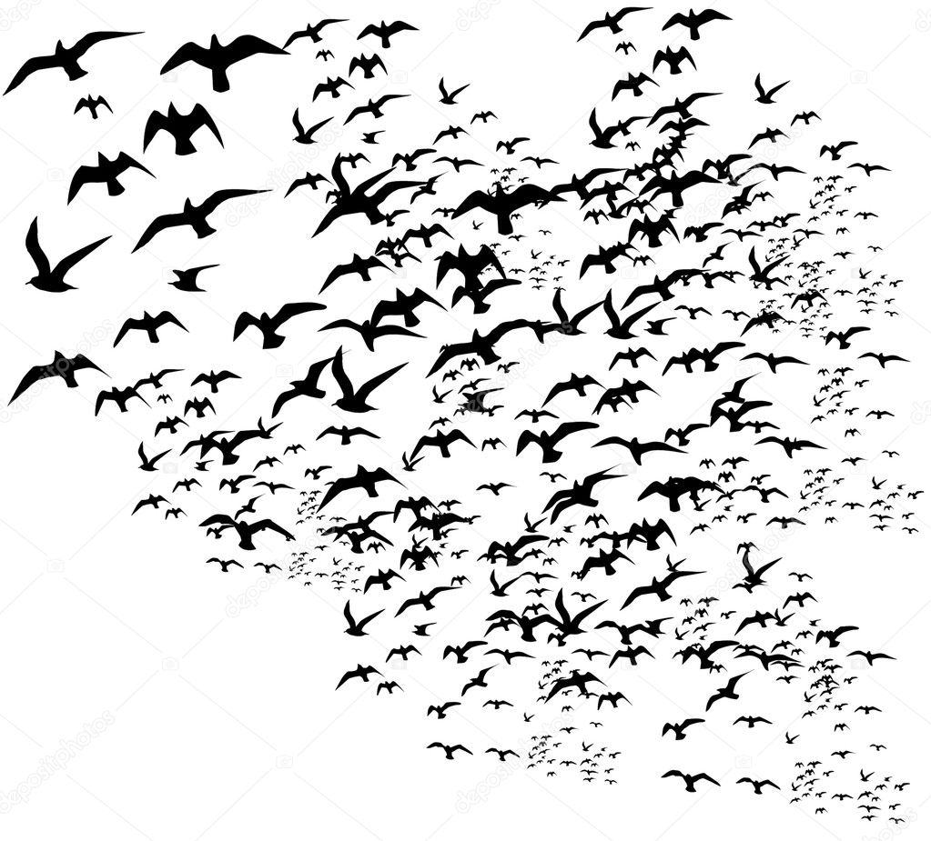 Black background birds life vector art