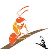 Fotografie Ants