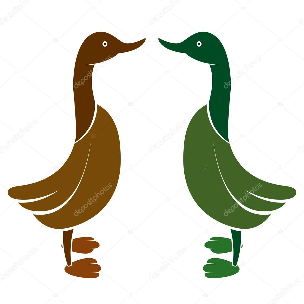 Vector image of an duck