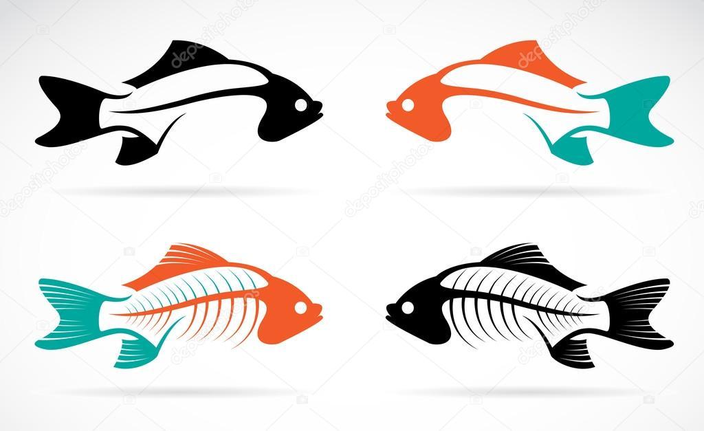 Vector image of an fish bones
