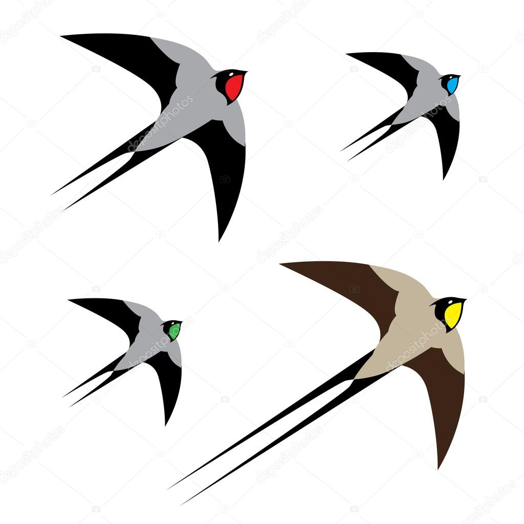 Four colorful birds in flight