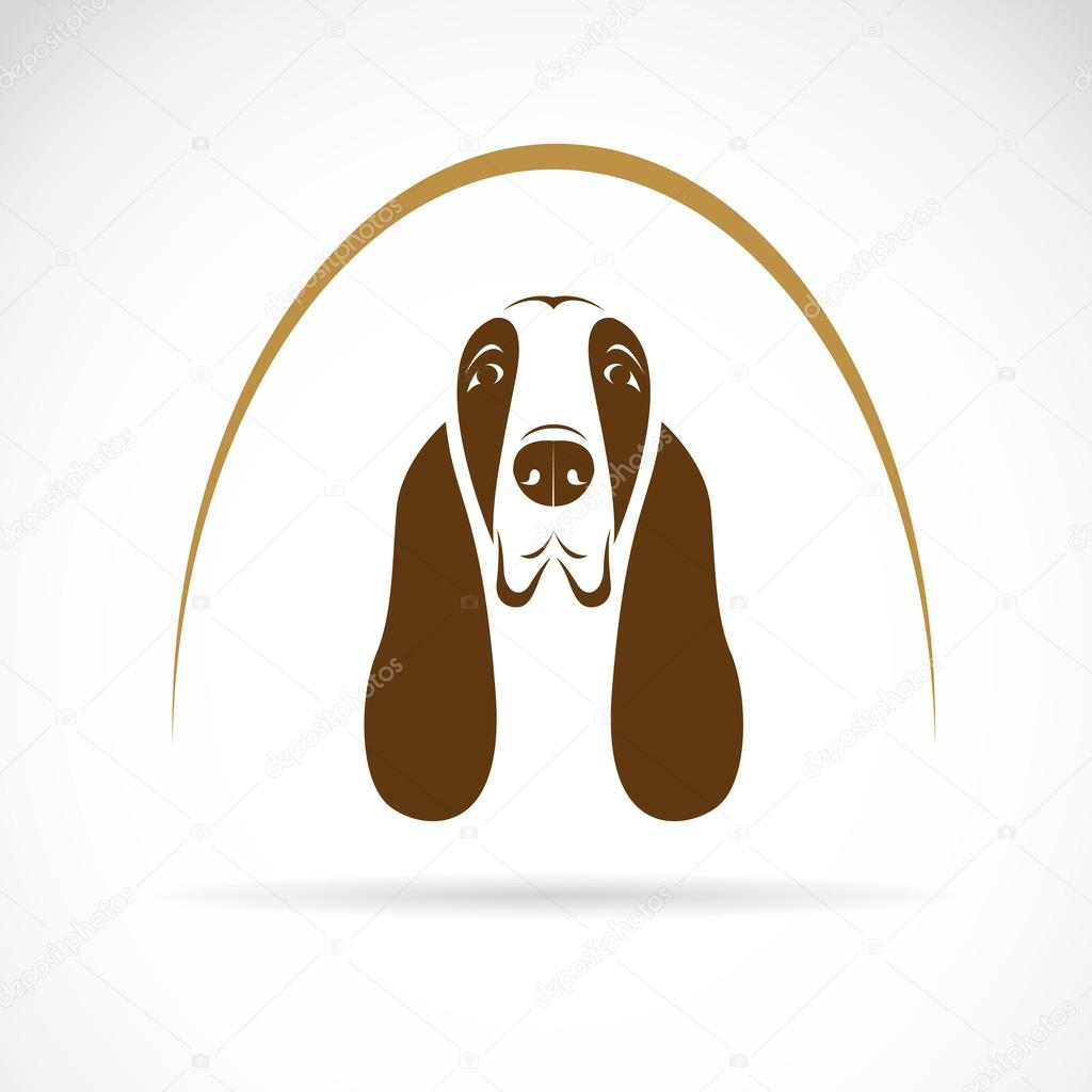 Vector image of an basset hound