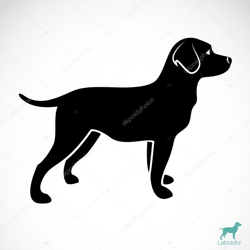Vector image of an dog labrador