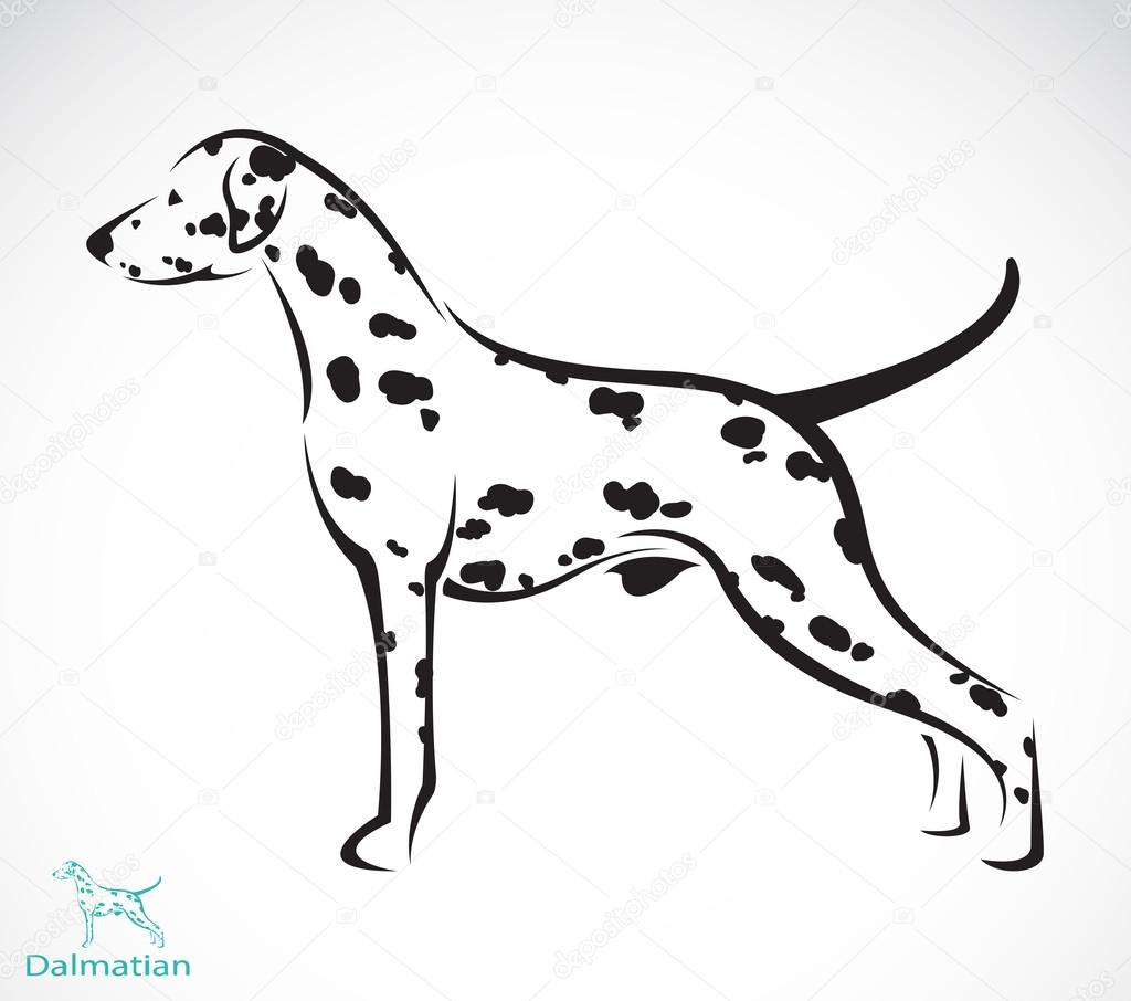 Vector image of an dalmatian dog
