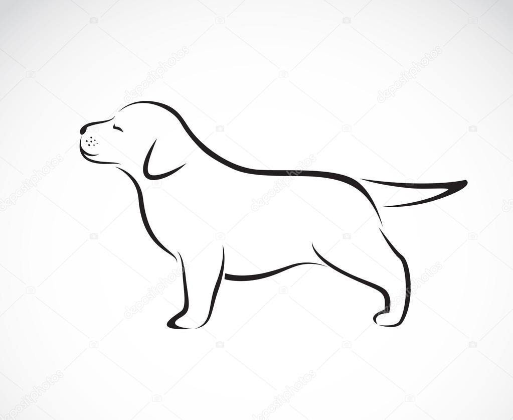 Vector image of labrador puppies