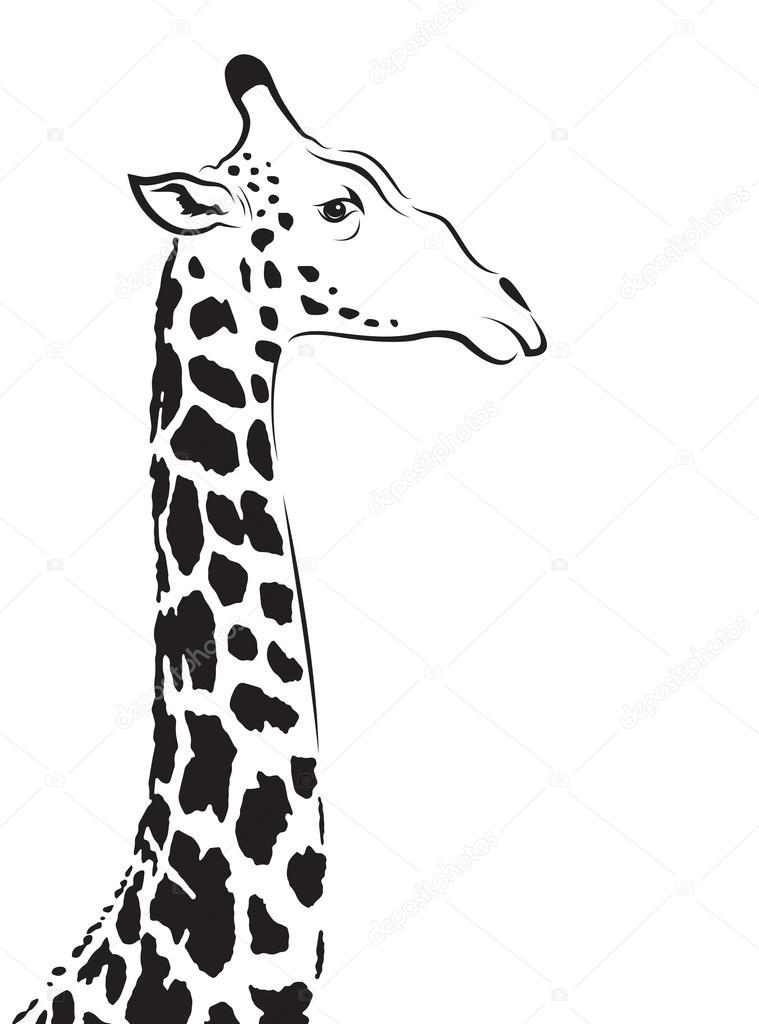 Vector image of an giraffe head