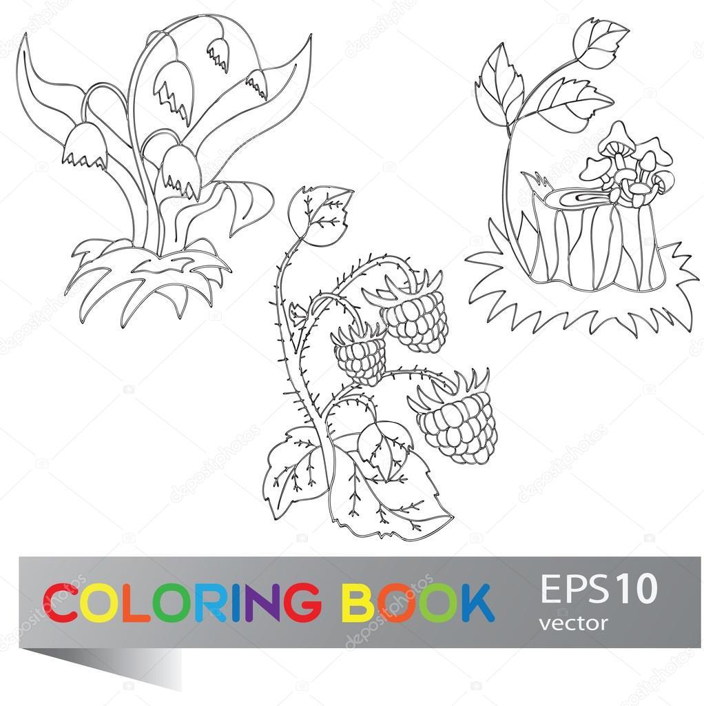 Dibujos Para Colorear De Animales Y Plantas Del Bosque Libro Para