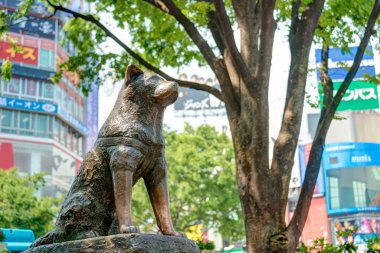 TOKYO, JAPAN - APRIL 17 2014: Hachiko statue. Hachiko (November 10, 1923 - March 8, 1935) was remembered for his remarkable loyalty to his owner which continued for many years after his owner's death.