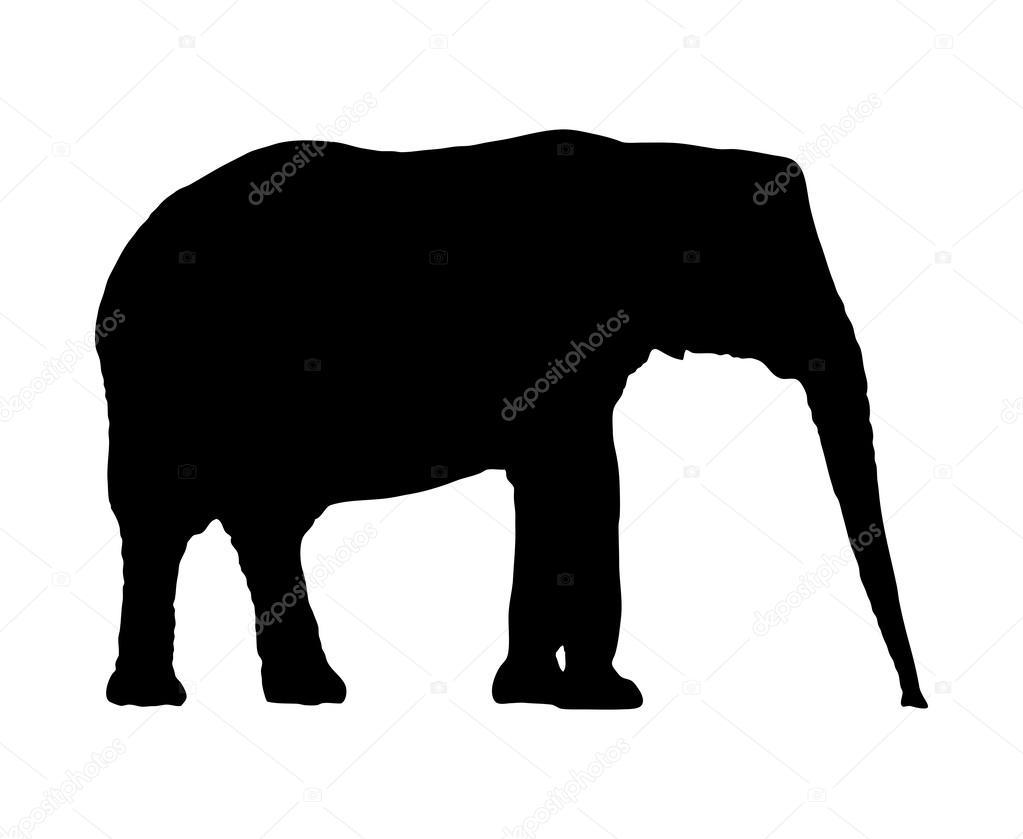 vector elephant silhouette stock vector kazlouskaya 37544497 rh depositphotos com cute elephant silhouette vector elephant silhouette vector free download