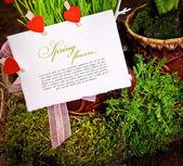 Fényképek Jácint virág
