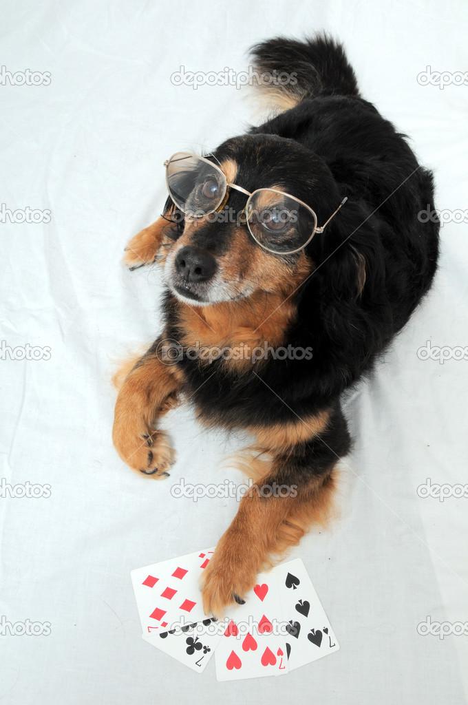 Perro De Póquer Foto De Stock Underworld1 32777115