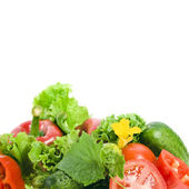 Gruppe von frischem reifem Gemüse und Kräutern