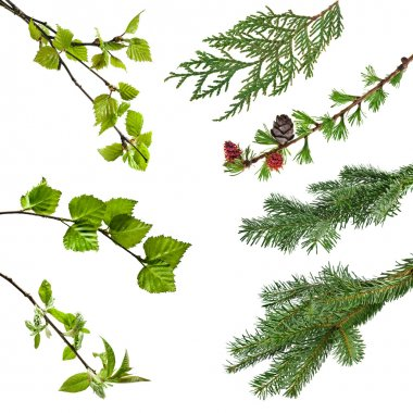 Branches of various trees and shrubs with leaves