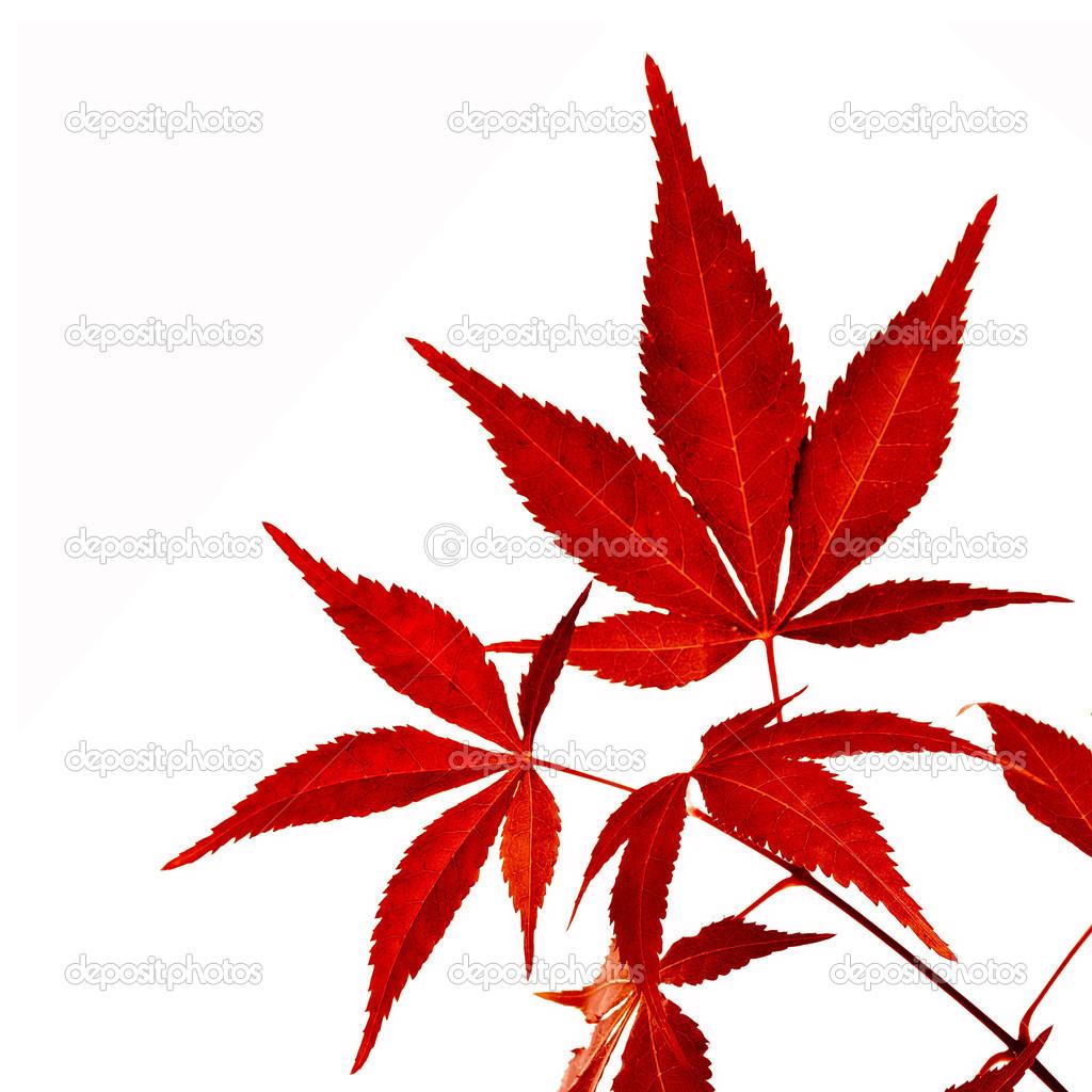 Feuilles d arbres fashion designs - Arbre feuille rouge toute l annee ...