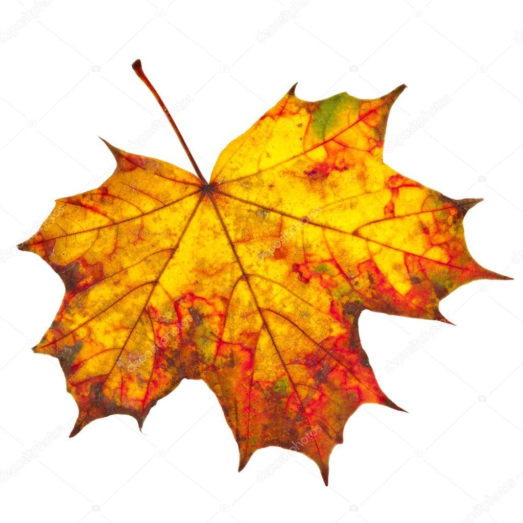 Výsledek obrázku pro podzimní listí obrázek