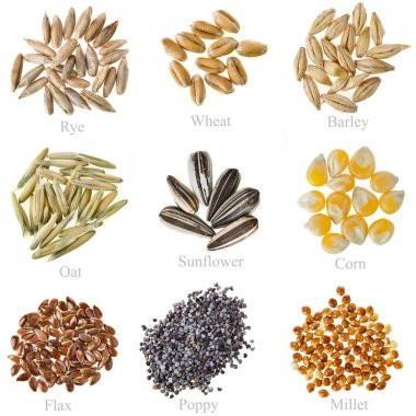 Collection Cereal Grains and Seeds: Rye, Wheat, Barley, Oat, Sunflower, Corn, Flax, Poppy, Millet closeup isolated on white