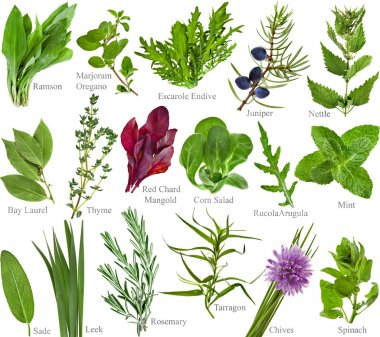 Collection fresh herb with names isolated on a white background