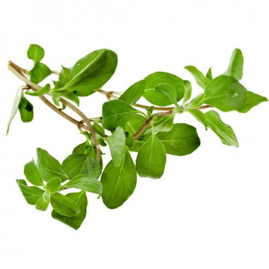 Fresh Herb Marjoram (origanum majorana) isolated on white