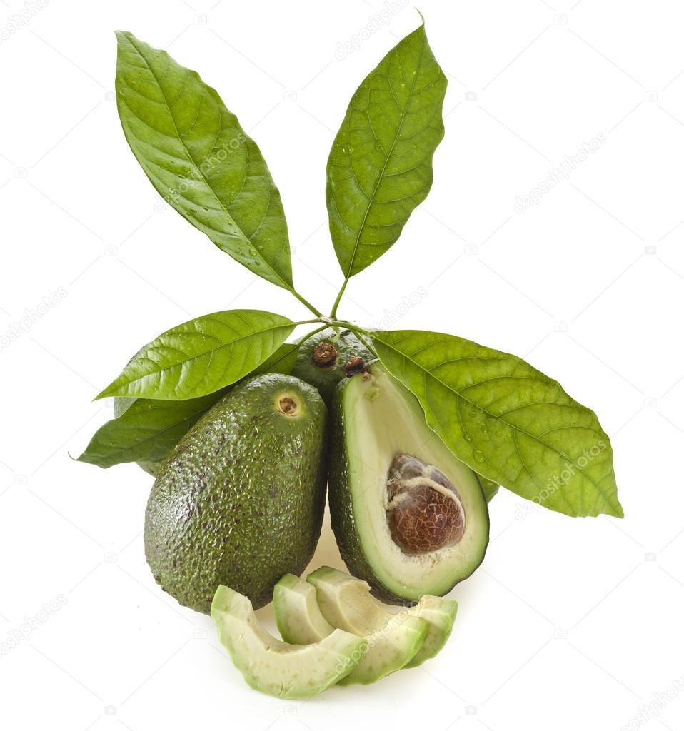 avocado baum pflege eine avocado sprieen mit blttern in einen topf mit erde ein junger avocado. Black Bedroom Furniture Sets. Home Design Ideas
