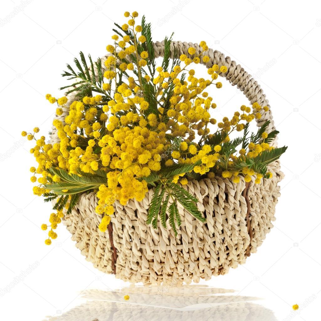Fleurs D Acacia Mimosa Bouquet Dans Un Panier Carte Sur Blanc