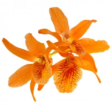 Orchid plant isolated on white background