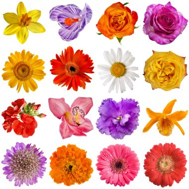 Flower heads set isolated on white background