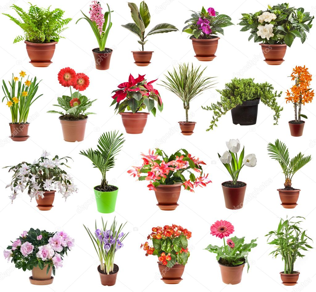 Collection of flower houseplants in flower pot, isolated on white background