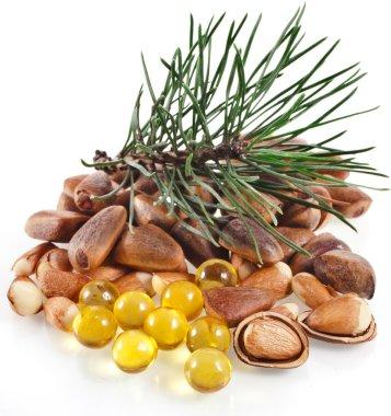 Cedar pine nuts and oil capsule