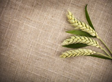 wheat ears on sack texture background
