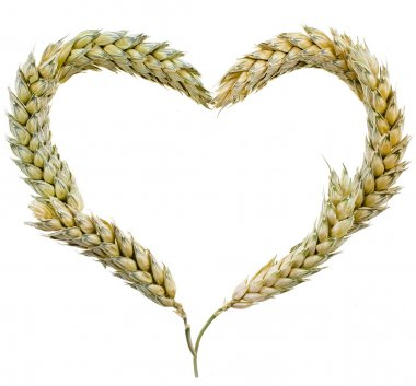 Wheat Frame Shape Heart isolated on white background