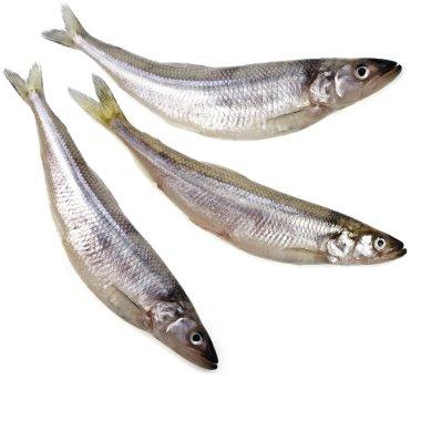fresh smelts Baltic fish