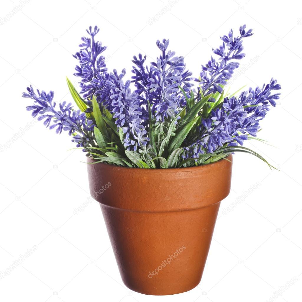 Lavanda pianta in vaso di argilla terracotta ceramica for Pianta lavanda in vaso