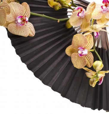 Beauty Black Japanese Paper Fan with Fresh Flower Orchid Isolated on white background