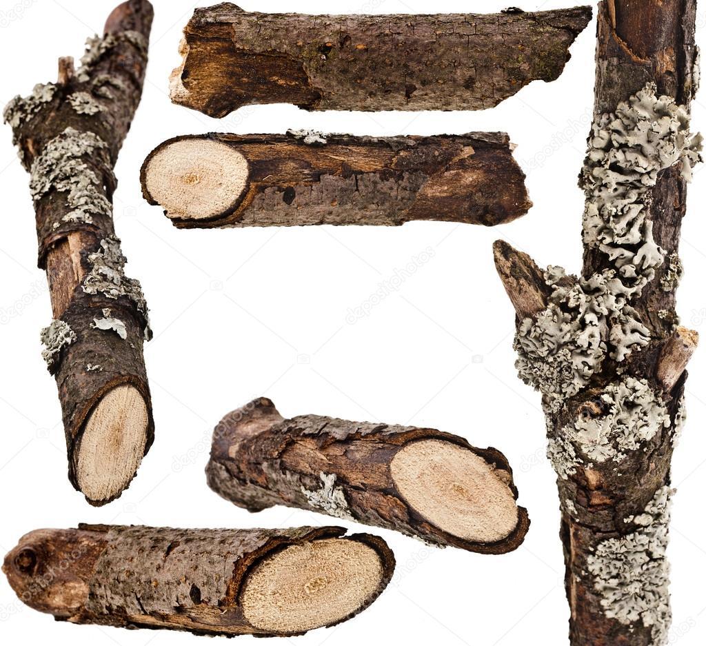картинка кора деревьев на прозрачном фоне сорта лещины фото