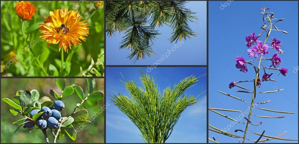 Healing drug plants herbs on blue sky