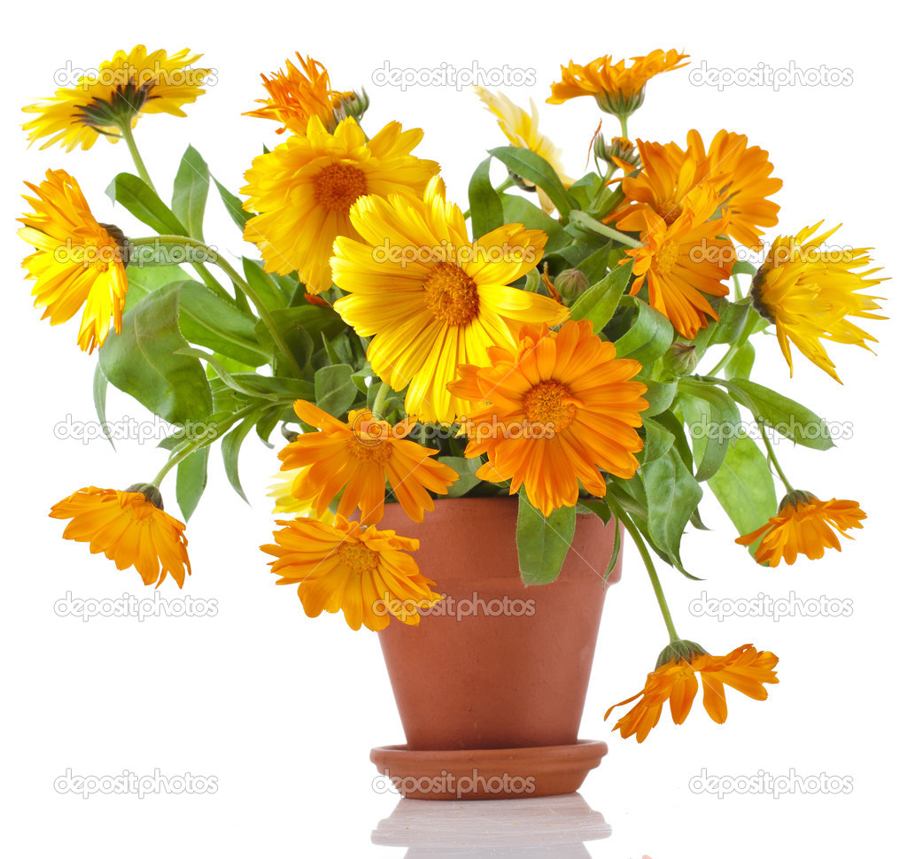 affordable beau bouquet de fleurs calendula officinalis en pot de fleurs en  cramique u photo with photos de beaux bouquets de fleurs