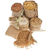 Photo Corn kernel seed meal and grains in bags