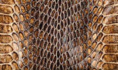 Snake skin texture closeup