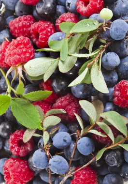 Background of assorted fresh berries