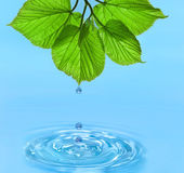 Víz csepp zöld levelek