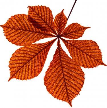 Leaf of horse chestnut tree