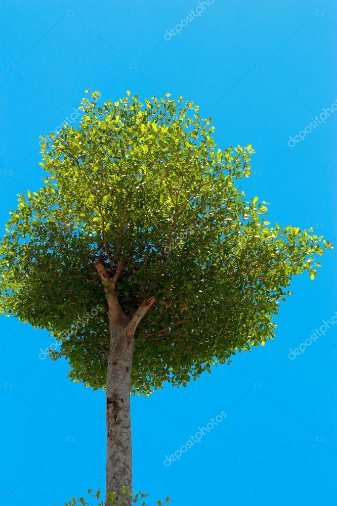 tree in the sky.