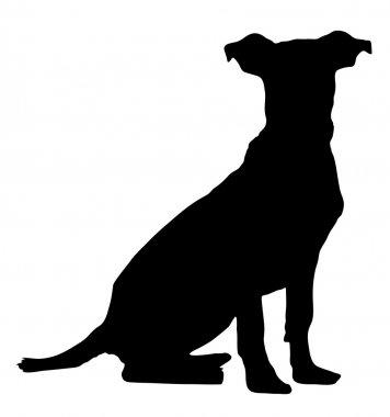 Hound Pitbull Weimaraner Mix Puppy Vector